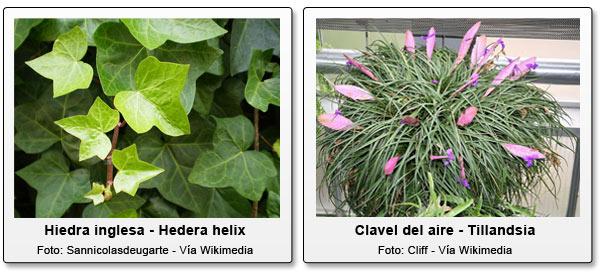 Plantas para combatir la humedad del hogar - Como combatir la humedad ...