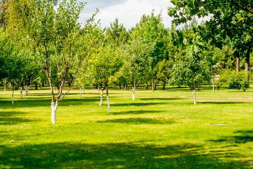 Parque con árboles y un cesped bien cuidado