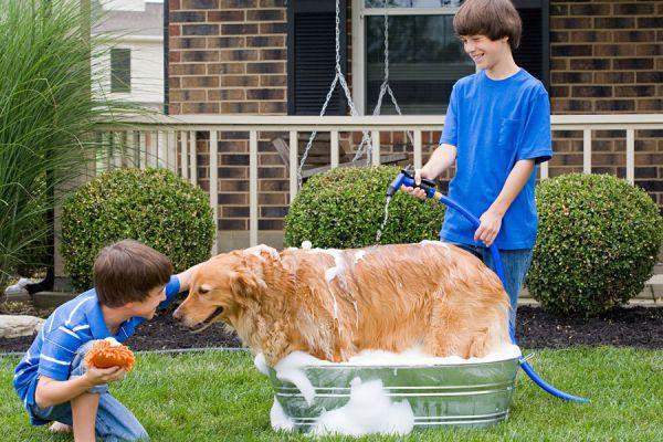 Cómo bañar a un perro