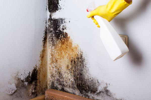 C mo sacar manchas de humedad en las paredes - Se puede pintar el aluminio ...