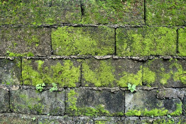 C mo eliminar el verd n de las paredes - Como quitar hongos de la pared ...