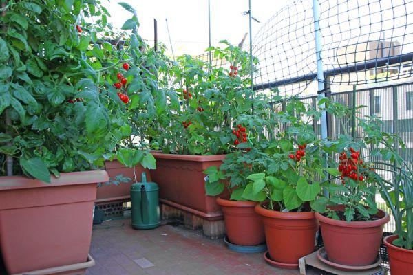 C mo hacer una huerta en un balc n o terraza for Como hacer un jardin en una terraza