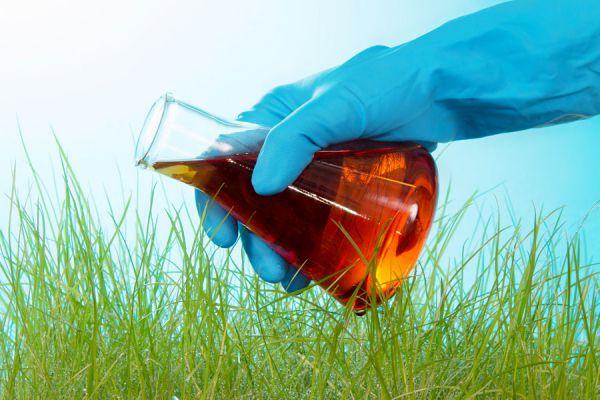 Como preparar Insecticidas Caseros para la Huerta Orgánica