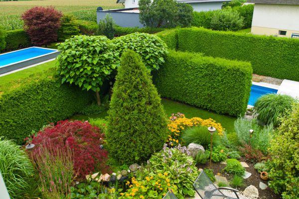 C mo utilizar arbustos para decorar - Arbustos de jardin ...