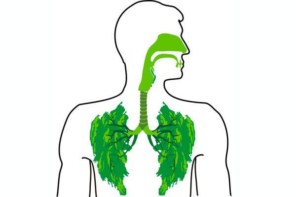 Cómo curar los problemas respiratorios con hierbas