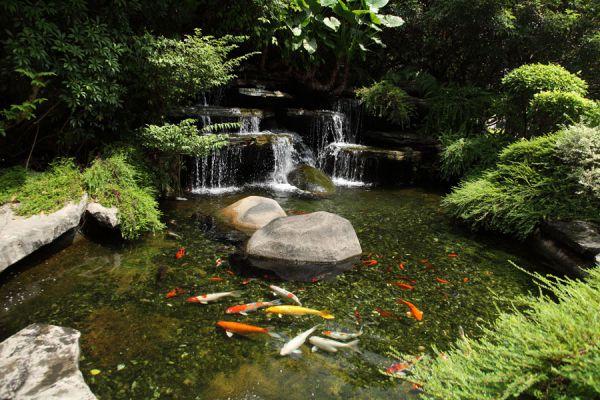 Consejos para tener un estanque de peces for Peces de estanque
