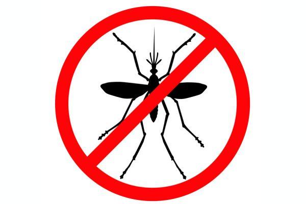 Usa estos repelentes caseros y dile adiós a los mosquitos
