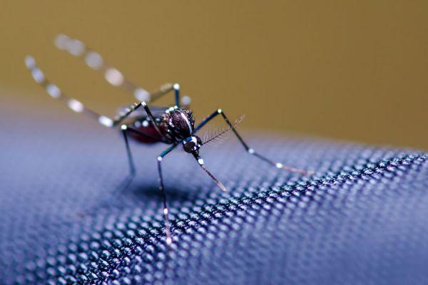 Guía para crear una efectiva trampa para mosquitos. cómo hacer una trampa para evitar los mosquitos. Trampa casera para combatir mosquitos