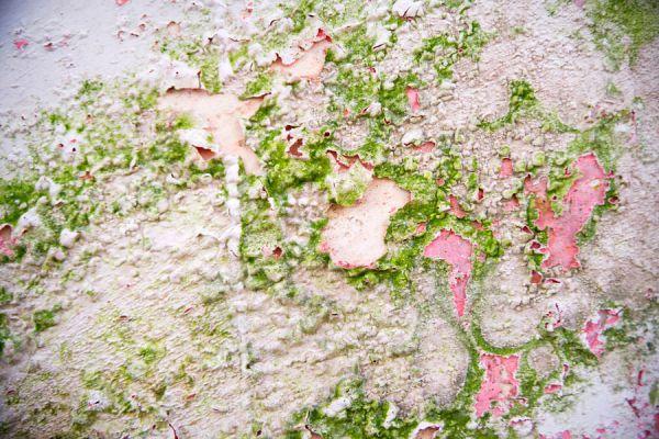 Guía para eliminar los hongos en las paredes. Cómo limpiar las paredes para quitar hongos.