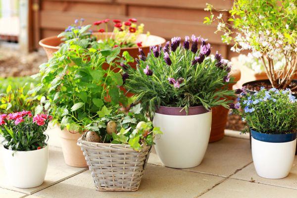 C mo cuidar las plantas en macetas - Macetas en la pared ...