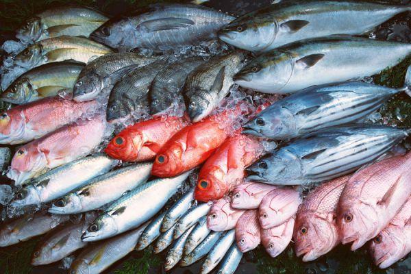 Cómo se clasifican los pescados