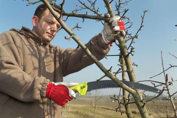 Descubre cuál es el momento ideal para podar un árbol. Hay tres tecnicas para hacerlo. Poda de formación, poda de mantenimiento y poda excepcional.