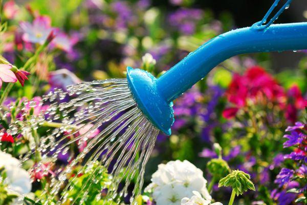 Consejos de riego. Cómo regar las plantas. Tips para regar las plantas de manera correcta. El mejor horario para regar las plantas.