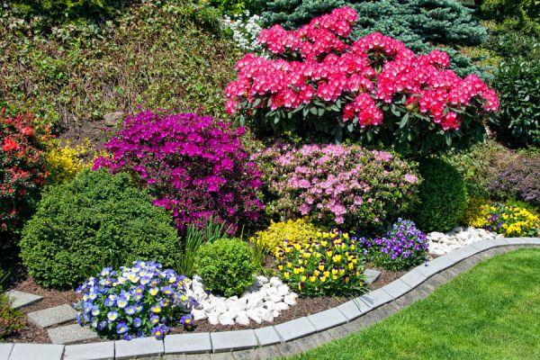 Un jardín con muchas flores durante todo el año. Cómo elegir plantas para tener un jardín florido por más tiempo. Flores y plantas para el jardín