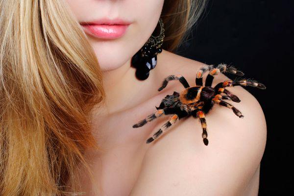 Cuidados de las mascotas exóticas. Como elegir una mascota exótica. Tips para cuidar mascotas exóticas