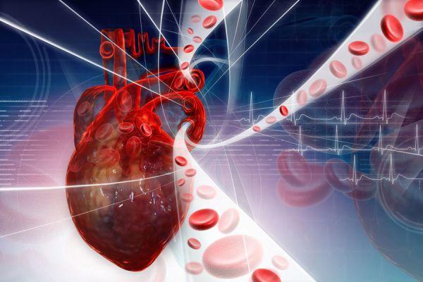 Consejos para mejorar la circulacion de la sangre. Tips para mejorar el sistema circulatorio. Mejora tu sistema circulatorio cambiando simples hábitos