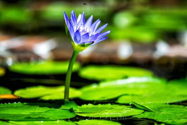 Cuidados de las plantas acuáticas. Cómo cuidar y mantener plantas acuáticas. Aprende cómo cuidar los 4 tipos de plantas acuáticas más comunes