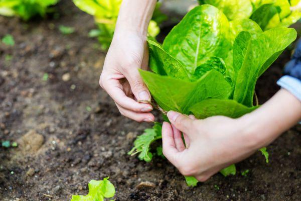 Cómo hacer una Huerta sin tener Jardín