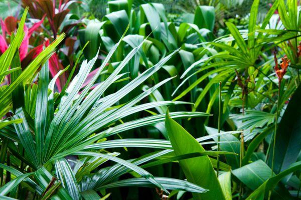C mo elegir plantas para un jard n de estilo tropical for Plantas pequenas para jardin