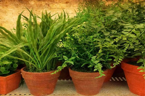 Cómo proteger del calor a las plantas de interior