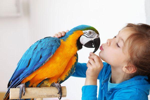 Cómo cuidar a los pájaros de mascota