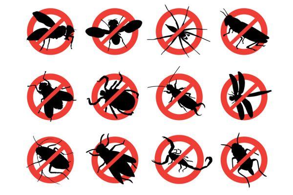 C mo ahuyentar a los insectos - Como ahuyentar a los mosquitos ...