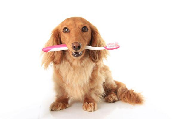 Cómo limpiar los dientes a perros y gatos