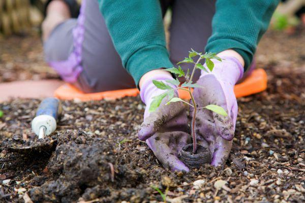 Cómo nutrir las plantas con diferentes abonos
