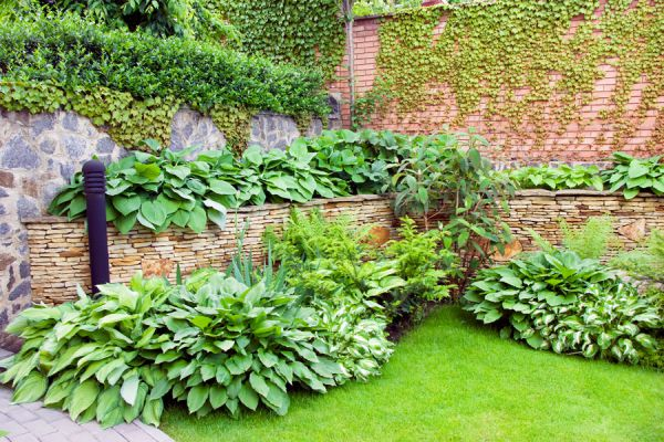 Cómo hacer un jardín verde