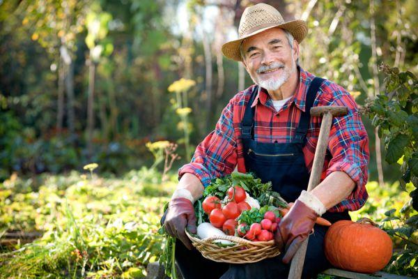 Cómo mejorar el cuidado de un huerto hogareño