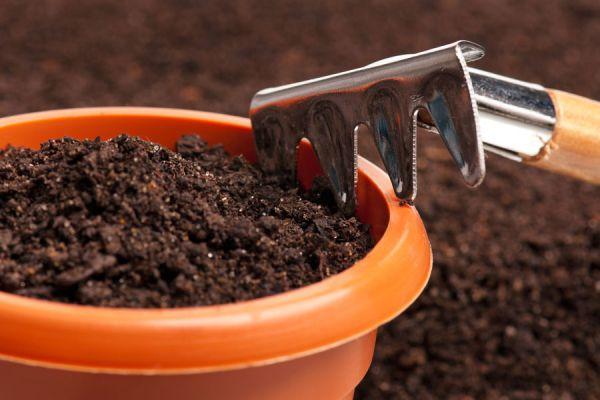 Guía para hacer abono casero en el interior de casa. Cómo preparar compost en un lugar cerrado. Método para hacer abono orgánico en un sitio cerrado