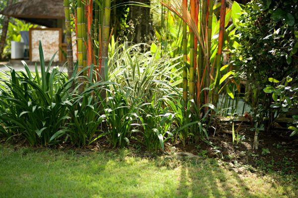 Cómo crear y mantener un jardín tropical