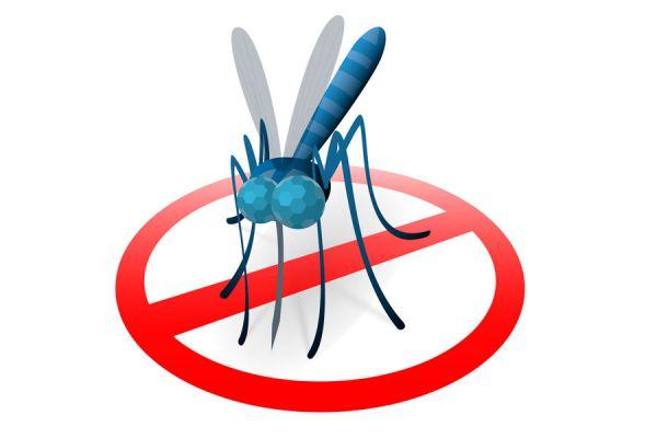 C mo ahuyentar a los mosquitos con productos naturales - Como ahuyentar mosquitos ...