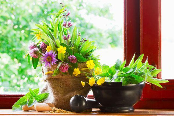 Beneficios de las plantas de interior para la salud