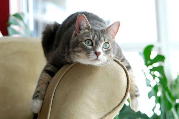 Cómo evitar que el gato arañe el sofá