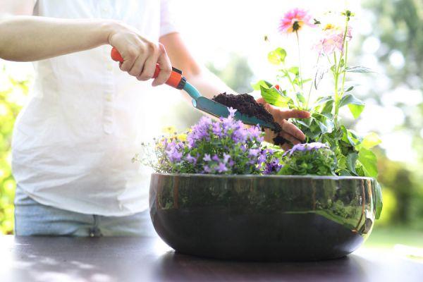 Cómo fertilizar las plantas con té