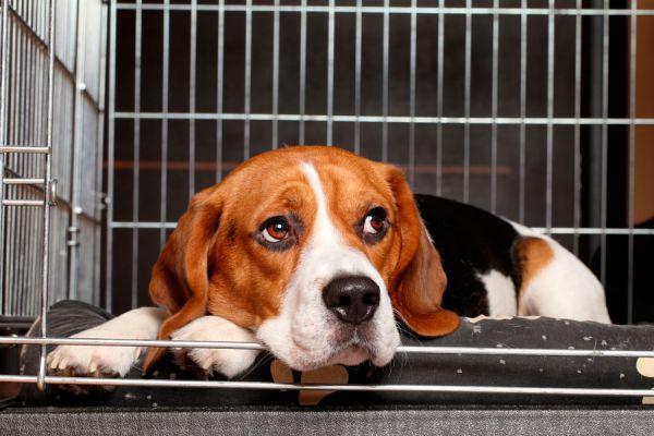 Cómo elegir una guardería canina