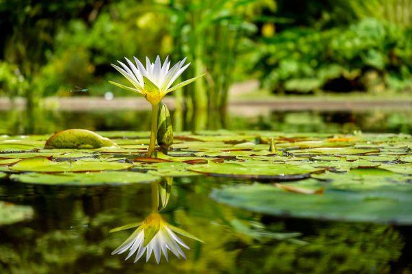 Cómo hacer un estanque artificial en el jardín. Pasos para crear un estanque en el jardín. Estanques para el jardín