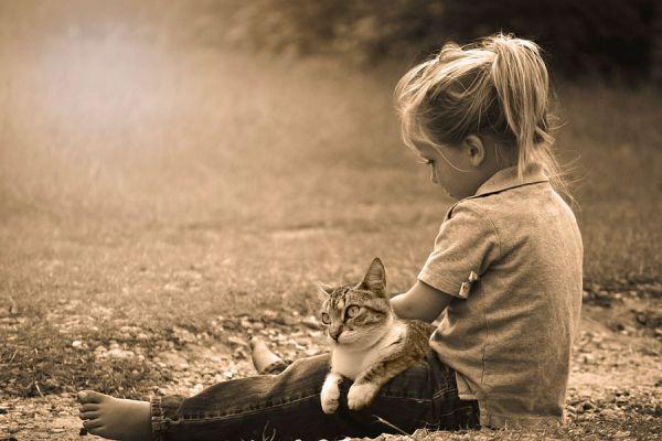 Por qué es importante jugar con el gato? Cómo hacer juegos con el gato. Ideas para jugar con tu gato. Entretenimientos para hacer con el gato
