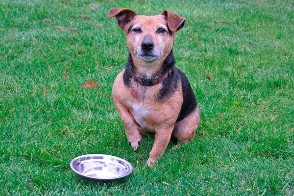 Consejos para elegir un comedero para perros. Claves para elegir el comedero para perros. Tips para elegir un comedero para tu perro