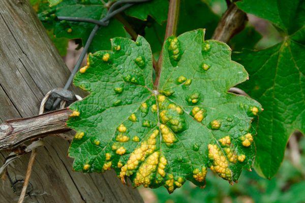 Reconocer las plagas en plantas de interior. Evitar plagas en plantas de interior