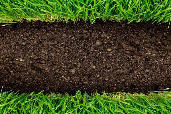 C mo evitar que las malas hierbas invadan el jard n for Como evitar que salga hierba en el jardin