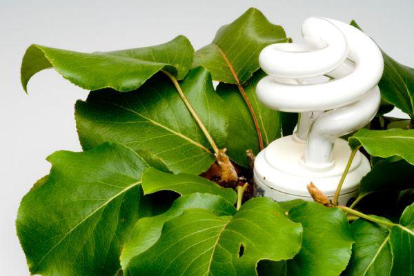Cómo hacer una maceta con lámpara integrada. Pasos para crear una maceta con una lámpara decorativa. Maceta decorativa