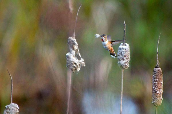 Cómo atraer colibríes. Nido casero para atraer colíbries. Cómo atraer un colibrí al jardín.