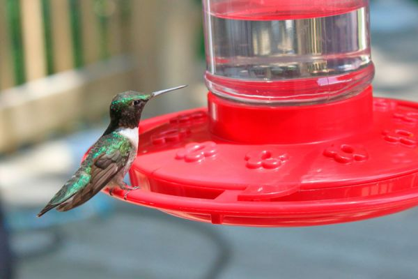 Prepara un alimentador para aves con materiales reciclados y disfruta su presencia. Guía para crear un comedero de colibríes casero
