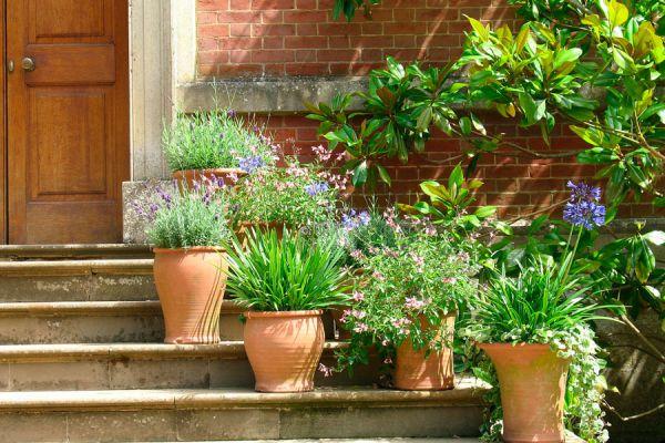 plantas para casas