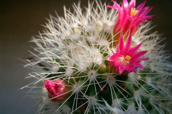 Lista de plantas para armonizar la casa. Atrae la prosperidad, paz y buenas energias con estas plantas.