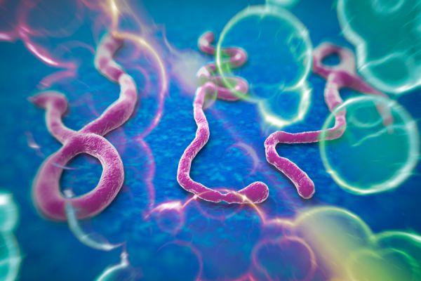 Métodos de prevención del virus Ébola. Qué es el virus del Ébola: origen y tratamiento. Cómo prevenir el contagio del Ébola