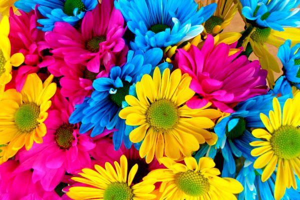 Guía para elegir flores para tu jardín. tips para la elección de las flores para un jardín. Qué flores poner en el jardín?
