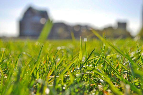 Tips para el cuidado y mantenimiento del césped. Pasos para cuidar el césped del jardín. Riego, abono y poda del césped del jardín
